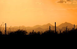 Saguaro national park. Evening scene over Saguaro national park Arizona Stock Photos