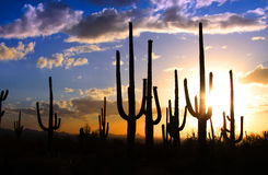 Saguaro national park Royalty Free Stock Photos