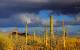 Saguaro national park Stock Image