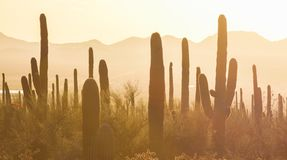 Saguaro National Park. Amazing Sunset Image of Saguaro National Park royalty free stock photos
