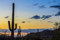 Saguaro National Park. Amazing Sunset Image of Saguaro National Park royalty free stock photography