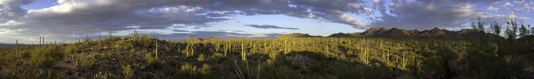 Saguaro National Park American Southwest Sonoran Desert Panorama. Mountain Landscape Saguaro National Park Sonoran Desert Long Panorama stock image