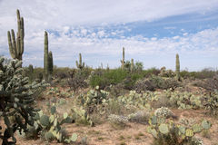 Saguaro National Park, Arizona, USA Stock Photos