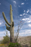 Saguaro National Park, Arizona, USA Stock Photography