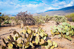 Saguaro National Park Stock Images