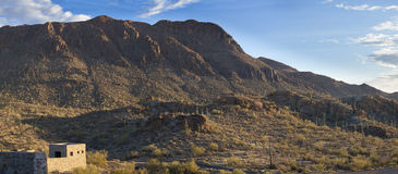 Saguaro national park at dawn Royalty Free Stock Photos