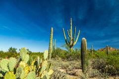 Saguaro National Park. In southern Arizona is part of the National Park System in the United States. The park preserves the desert landscape, fauna, and flora Stock Images