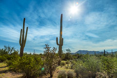 Saguaro National Park. In southern Arizona is part of the National Park System in the United States. The park preserves the desert landscape, fauna, and flora Stock Photo