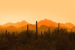 Saguaro national park stock photos