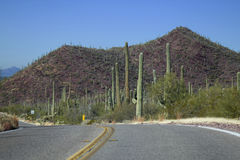 Saguaro-Nationalpark Stockbild