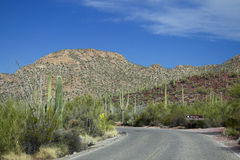 Saguaro-Nationalpark Lizenzfreies Stockbild