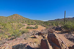 Saguaro-Nationalpark Stockbilder