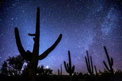 Saguaro Night Royalty Free Stock Image