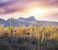 Saguaro Park Stock Photos