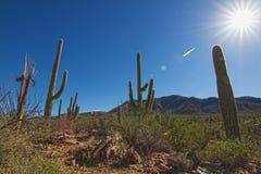 Saguaro park narodowy Zdjęcia Stock