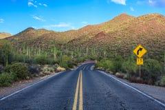 Saguaro park narodowy Zdjęcie Stock