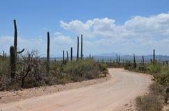 Saguaro park narodowy, Arizona, usa Obraz Stock