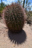 Saguaro park narodowy, Arizona, usa Fotografia Stock