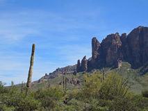 Saguaro Pointing in Lost Dutchman State Park Royalty Free Stock Photography
