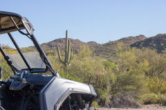 Saguaro and RAZR Royalty Free Stock Images