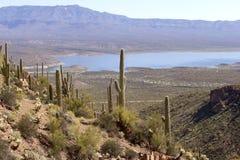 Saguaro. Sguaro cactus in Sonoran Desert, Arizona, USA stock photo