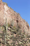 Saguaro. Sguaro cactus in Sonoran Desert, Arizona, USA royalty free stock image