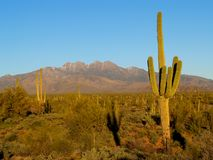 Saguaro Shadow at Four Peaks. The Four Peaks Wilderness was established in 1984, and contains approximately 60,740 acres with a major mountain rising up in its Stock Photography