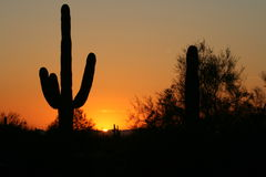 Saguaro sihlouette Stock Photos