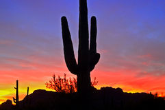 Saguaro Silhouette Royalty Free Stock Images