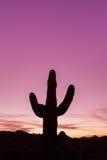 Saguaro-Sonnenuntergang Lizenzfreies Stockfoto
