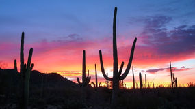 Saguaro Sunrise Stock Photography
