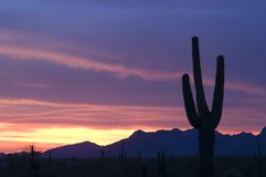 Saguaro at Sunset. A saguaro cactus is silhouetted against a brilliant Arizona sunset Royalty Free Stock Photos