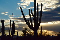Saguaro Sunset Royalty Free Stock Photo