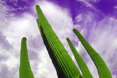 Saguaro surreale Fotografie Stock