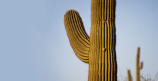Saguaro Tree greeting banner American South West Royalty Free Stock Images