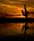 Saguaro & Water Sunset. Fiery orange sunset in Arizona with saguaro cactus silhouette & reflection in water Stock Images