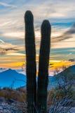 Saguaro zmierzch Obraz Royalty Free