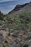 Saguarobergketen langs Poortenpas royalty-vrije stock afbeelding