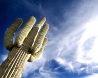 Saguaroboom van de woestijn met pluizige wolkenzonsondergang Royalty-vrije Stock Foto's
