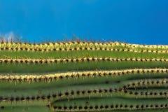 Saguarocactus bij Zonsondergang in Sonoran-Woestijn stock foto