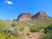 Saguarocactus in Pastelkleur Gekleurde Woestijn Stock Afbeeldingen