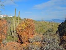 Saguarocactussen, Verdant Heuvels en de Vier Pieken Stock Foto