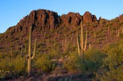 Saguarokakteen am Sonnenuntergang Lizenzfreie Stockfotos