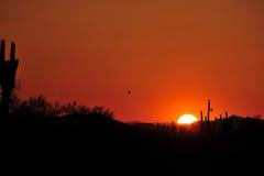 Saguarokaktus Lizenzfreies Stockfoto