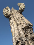 Saguarokaktus, der auf der Sonoran-Wüste in Arizona, ein heißes a wächst Lizenzfreie Stockfotos