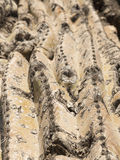 Saguarokaktus, der auf der Sonoran-Wüste in Arizona, ein heißes a wächst Lizenzfreies Stockbild
