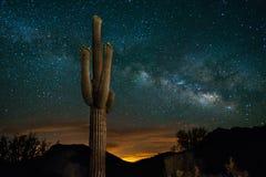 Saguarokaktus och Vintergatan Fotografering för Bildbyråer