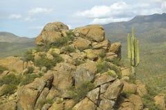 Saguarokaktus und -abhang mit Bergen im Hintergrund weg von Weg 89 in den Aberglaube-Bergen östlich von Phoenix, AZ Lizenzfreies Stockfoto
