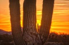 Saguarokaktusschattenbild mit einem aufgehende Sonne Stockbild