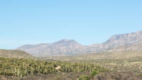 Saguarolandskap Arkivfoto